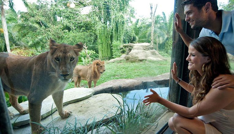 Bali-Zoo9