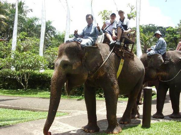 bakas-elephant2
