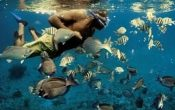 From Bali: Snorkelling Day Trip to Nusa Lembongan